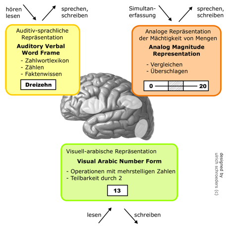 Neuronale Verortung der Module im Triple-Code-Modell nach Dehaene (1992)